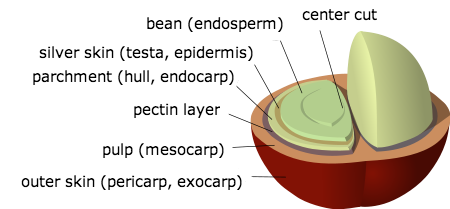 Cherry coffee structure