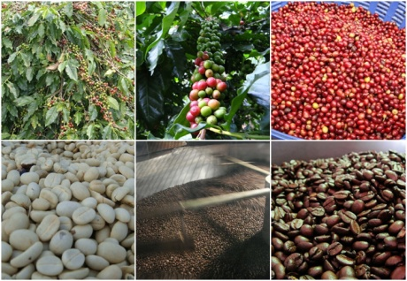 Cherry to coffee process