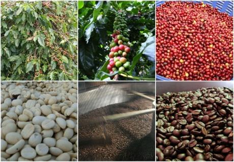 Cherry to coffee process
