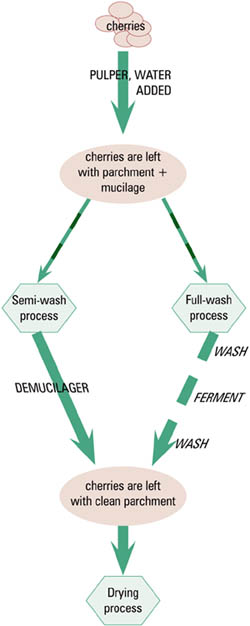 Coffee washing process